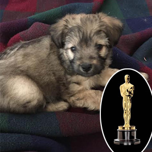 Oscars 2016, Puppies