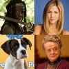 Downton Abbey, Friends, Walking Dead, Puppy Bowl