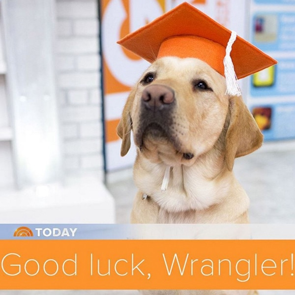 Wrangler, Today Show, Instagram