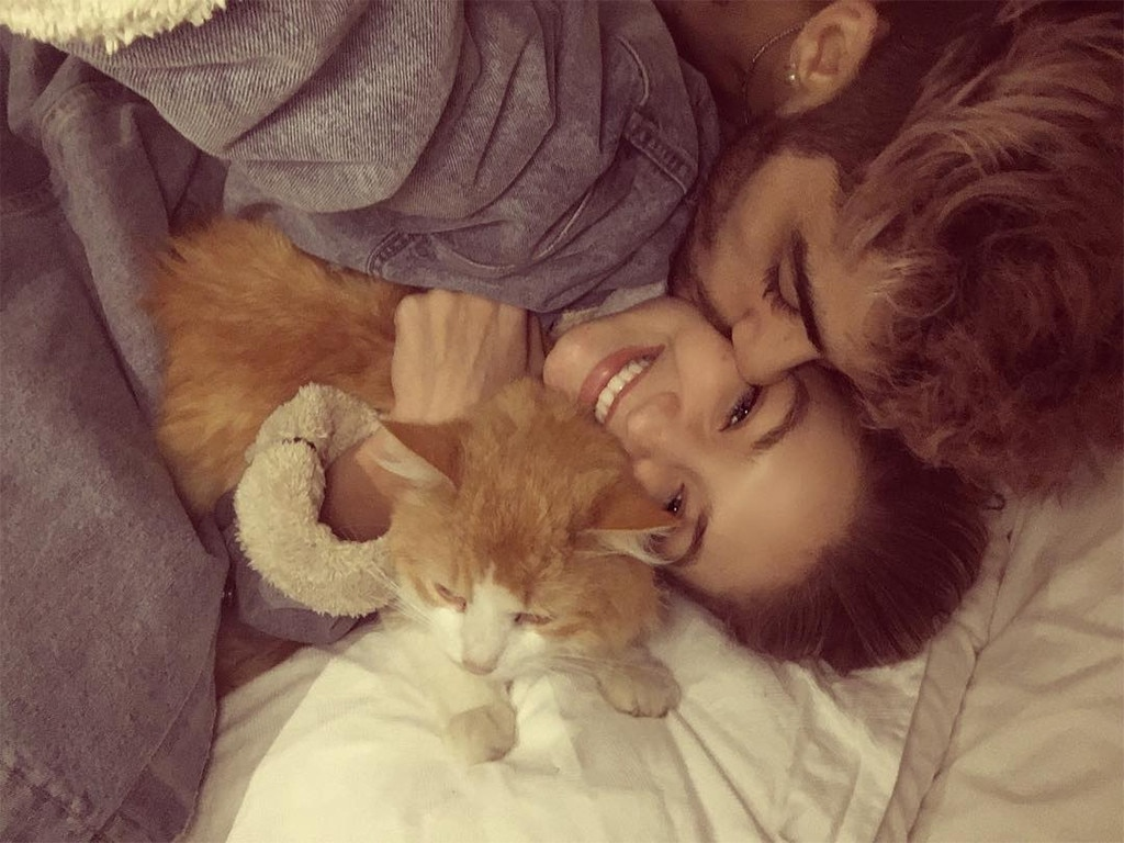 Gigi Hadid, Zayn Malik, Cat