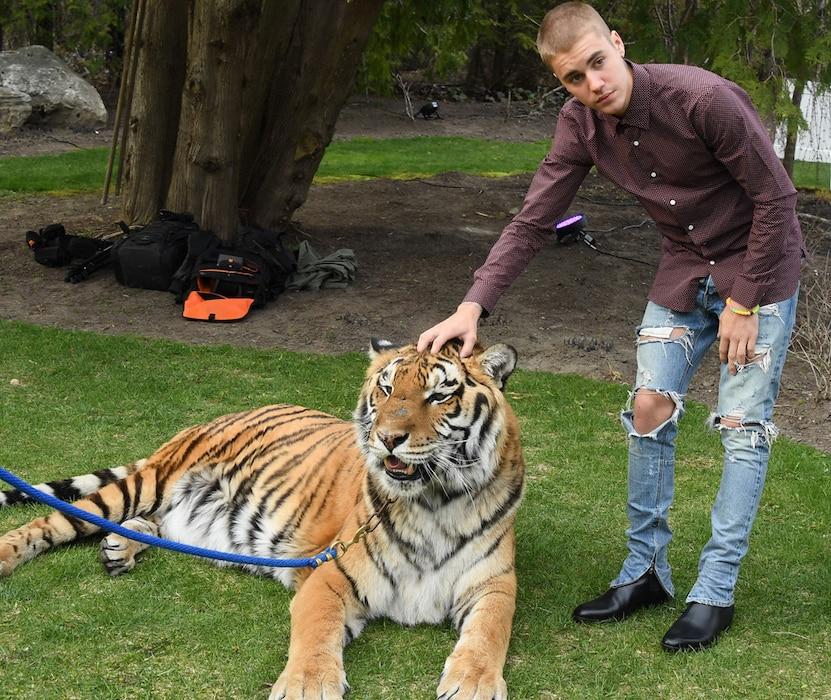 Justin Bieber, Tiger