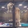 Kitten-Puppy jail break video, JoLinn Pet House