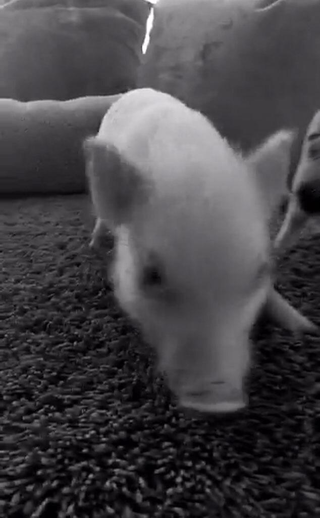 Demi Lovato, Snapchat