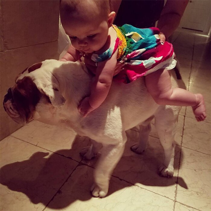 Baby Chanel, Dog Spartacus