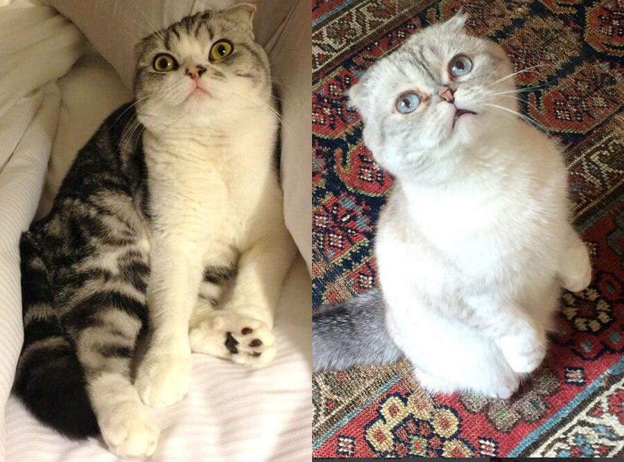 Pet Week, Taylor Swift, Olivia Benson, Meredith, Instagram, Cats