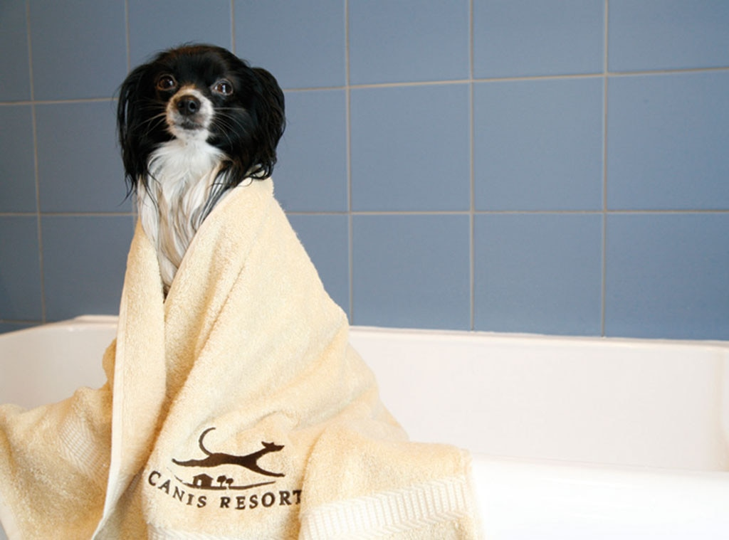 Canis Resort, Spa, Pet week