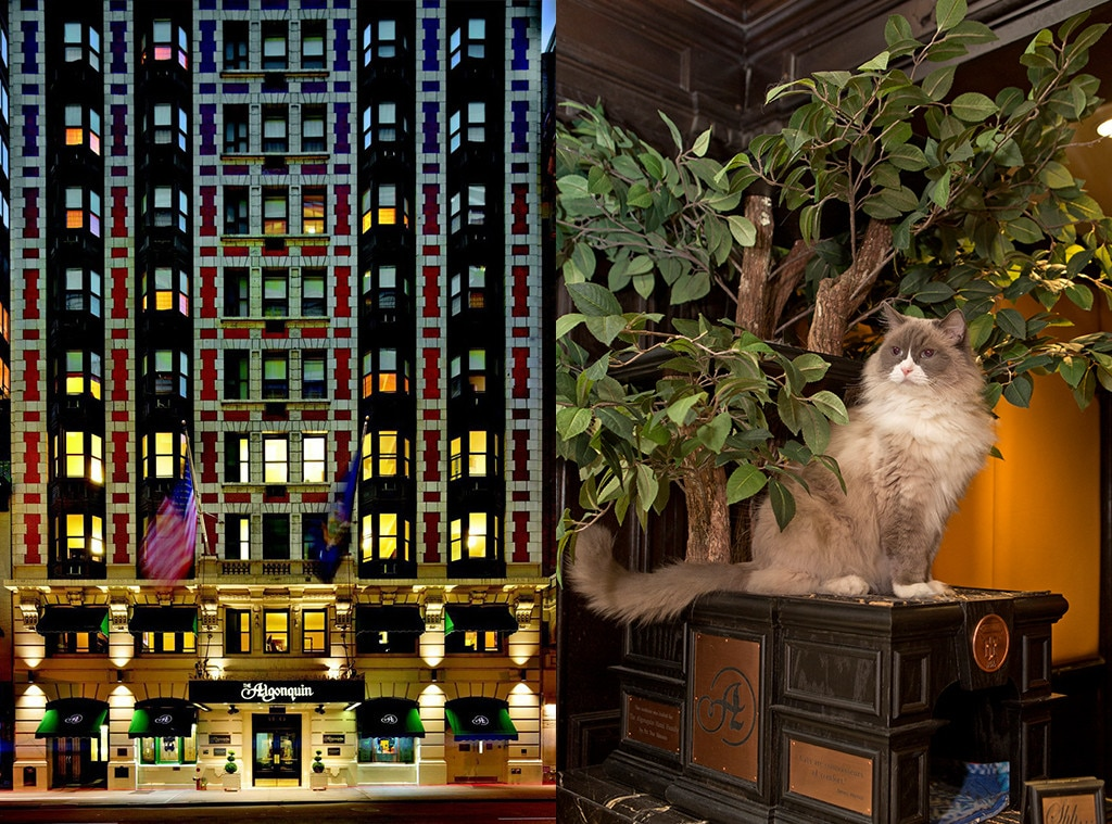 The Algonquin Hotel, Pet week