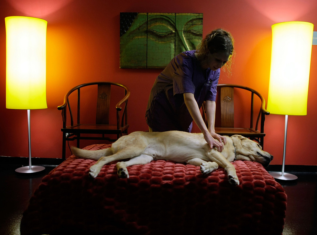 Chateau Poochie, Dog Massage