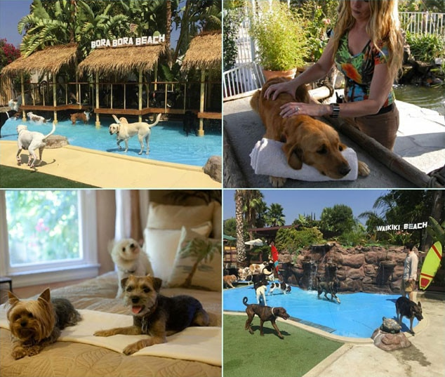 Paradise Ranch Pet Resort, Pet week