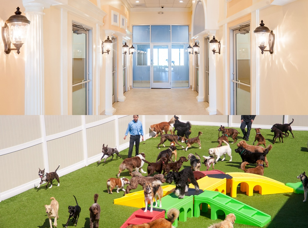 K-9 Resorts Daycare & Luxury Hotel