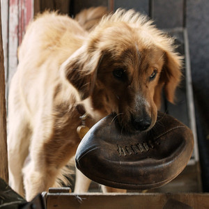 A Dog S Purpose Mistreatment Video