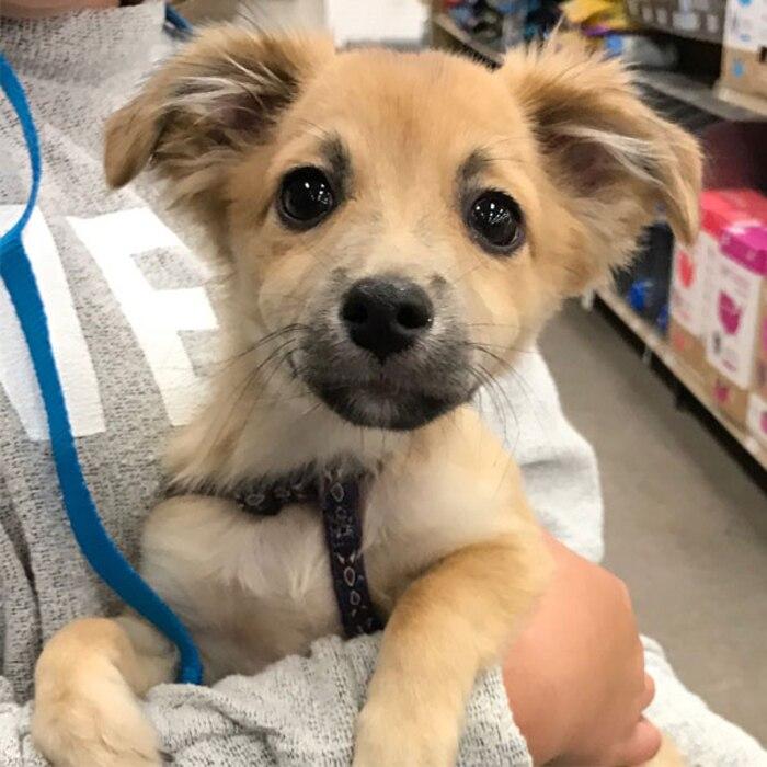 2017 Oscars Puppies, Adopt Me Rescue, Bentley