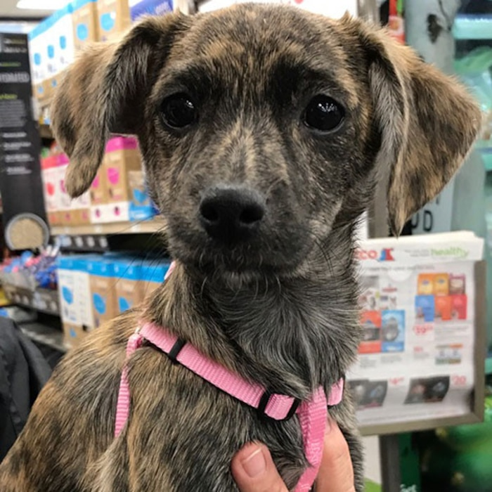 2017 Oscars Puppies, Adopt Me Rescue, Jewell