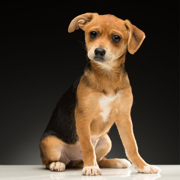 2017 Oscars Puppies, LA Animal Rescue, Margarita