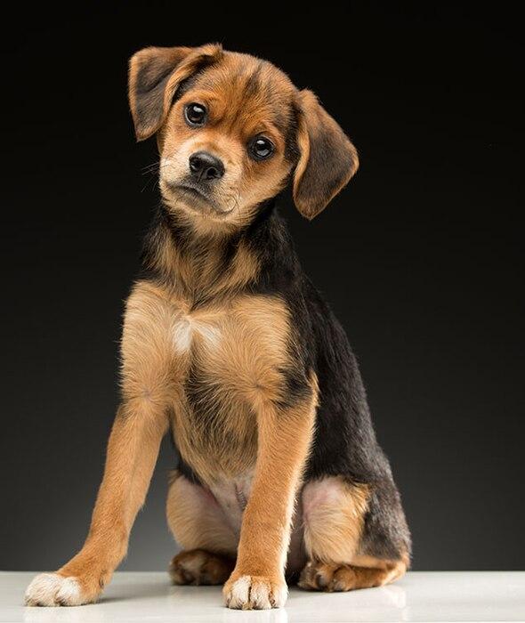 2017 Oscars Puppies, LA Animal Rescue, Taco