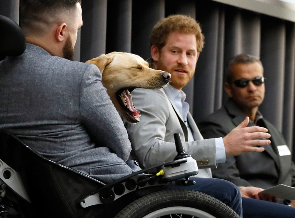 Prince Harry, Dog Yawning