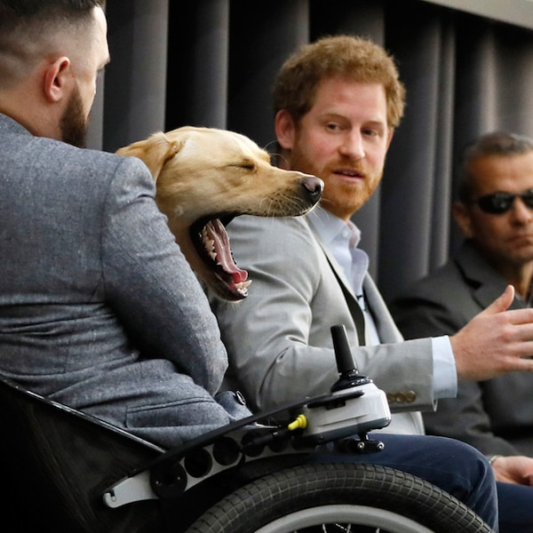 Man's Best Friend From Prince Harry's Cutest Moments With