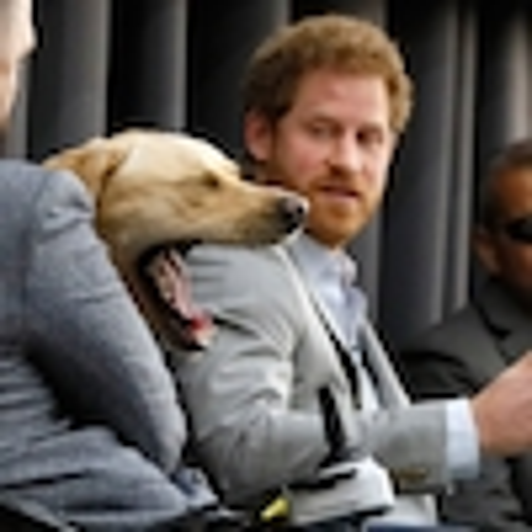 Prince Harry, Dog Yawning