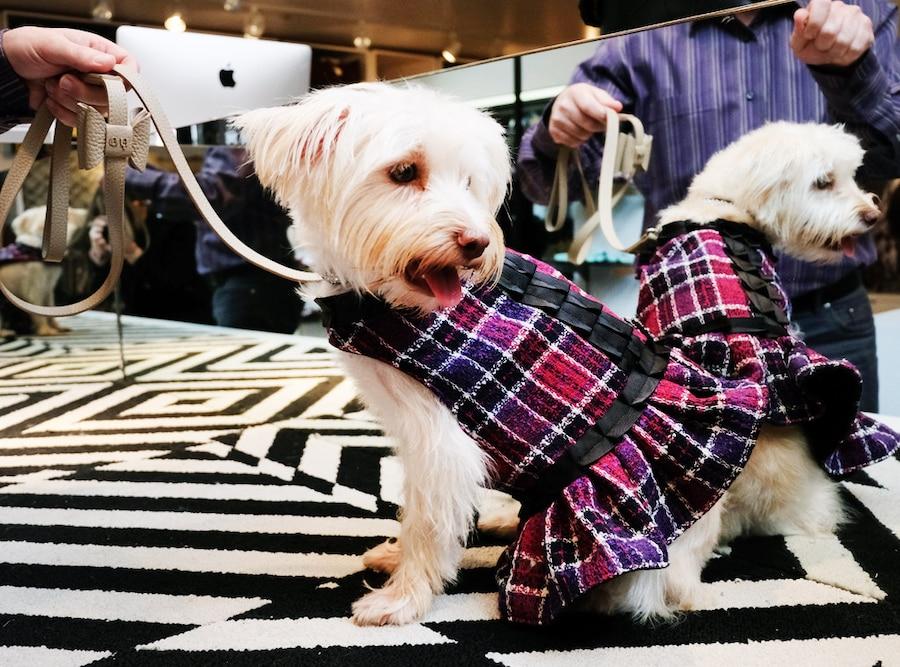 ESC: Celeb Puppy Day In The Life, Savannah