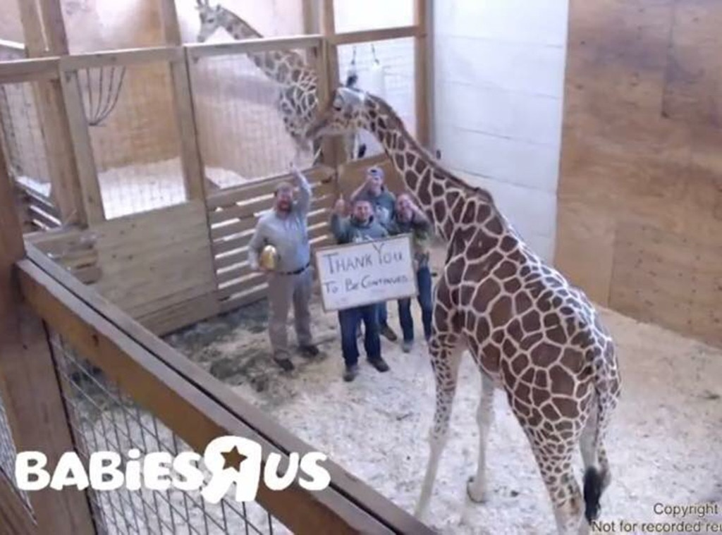 April the Giraffe, Twitter