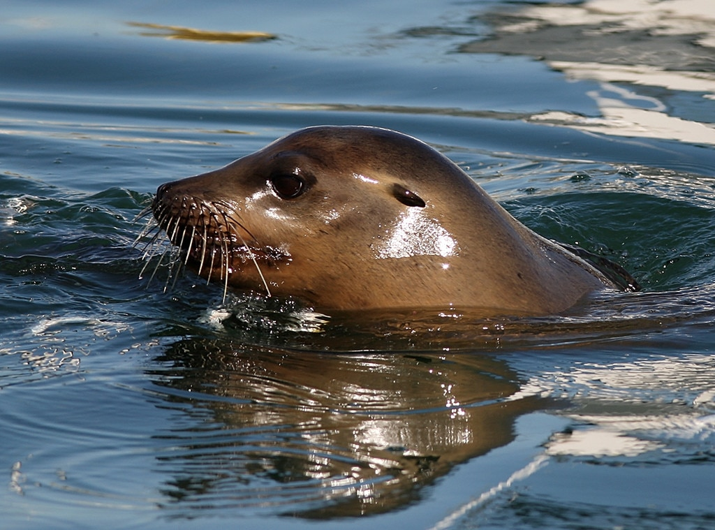 Sea Lion Drags Girl into Water in Canada in Terrifying ...