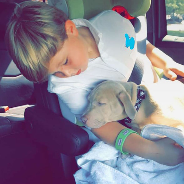 Kim Zolciak-Biermann Surprises Kash With a Pit Bull 4 Months After Dog Attack