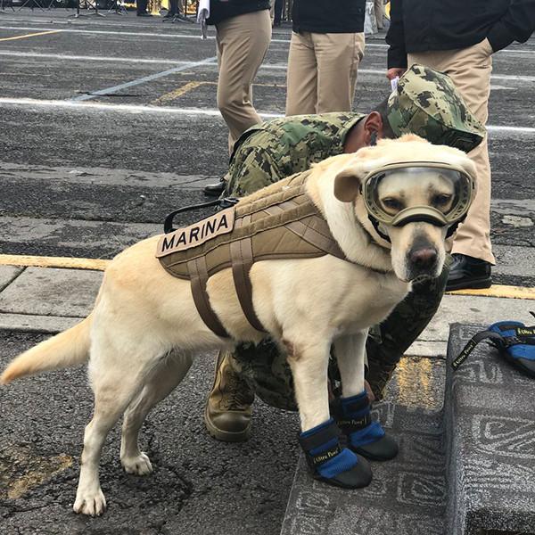 Frida, Mexican Rescue Dog