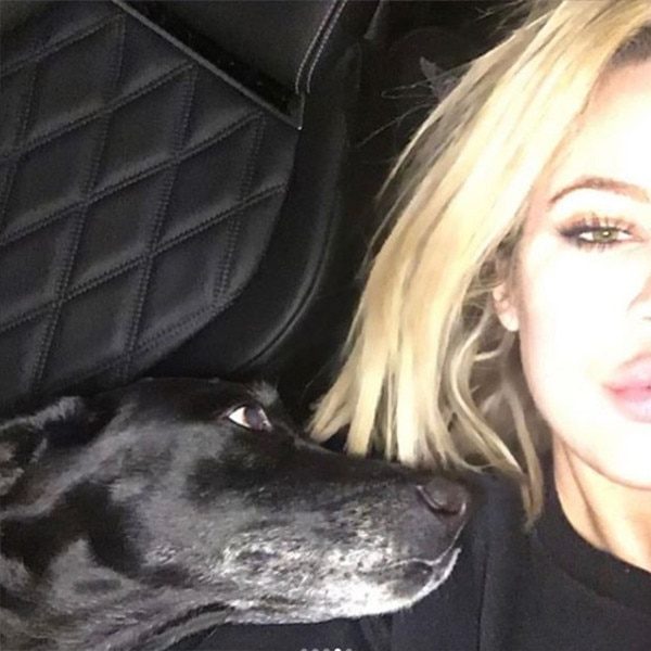 Khloe Kardashian & Kendall Jenner Mourn the Death of Their Family Dog, Gabbana