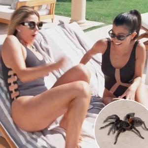 Keeping Up with the Kardashians, Larsa Pippen, Kourtney Kardashian, Spider