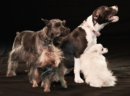 Snoops Dogs, Group