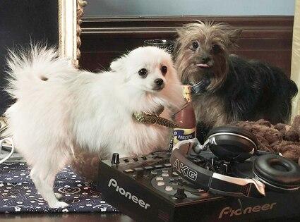 Snoops Dogs, Princess, Coco