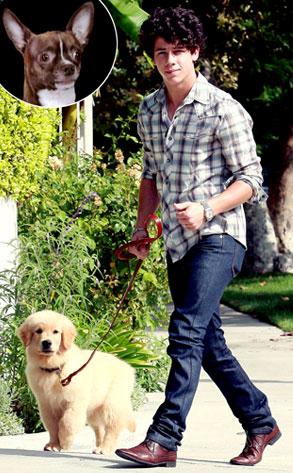 Lou the Chihuahua, Nick Jonas
