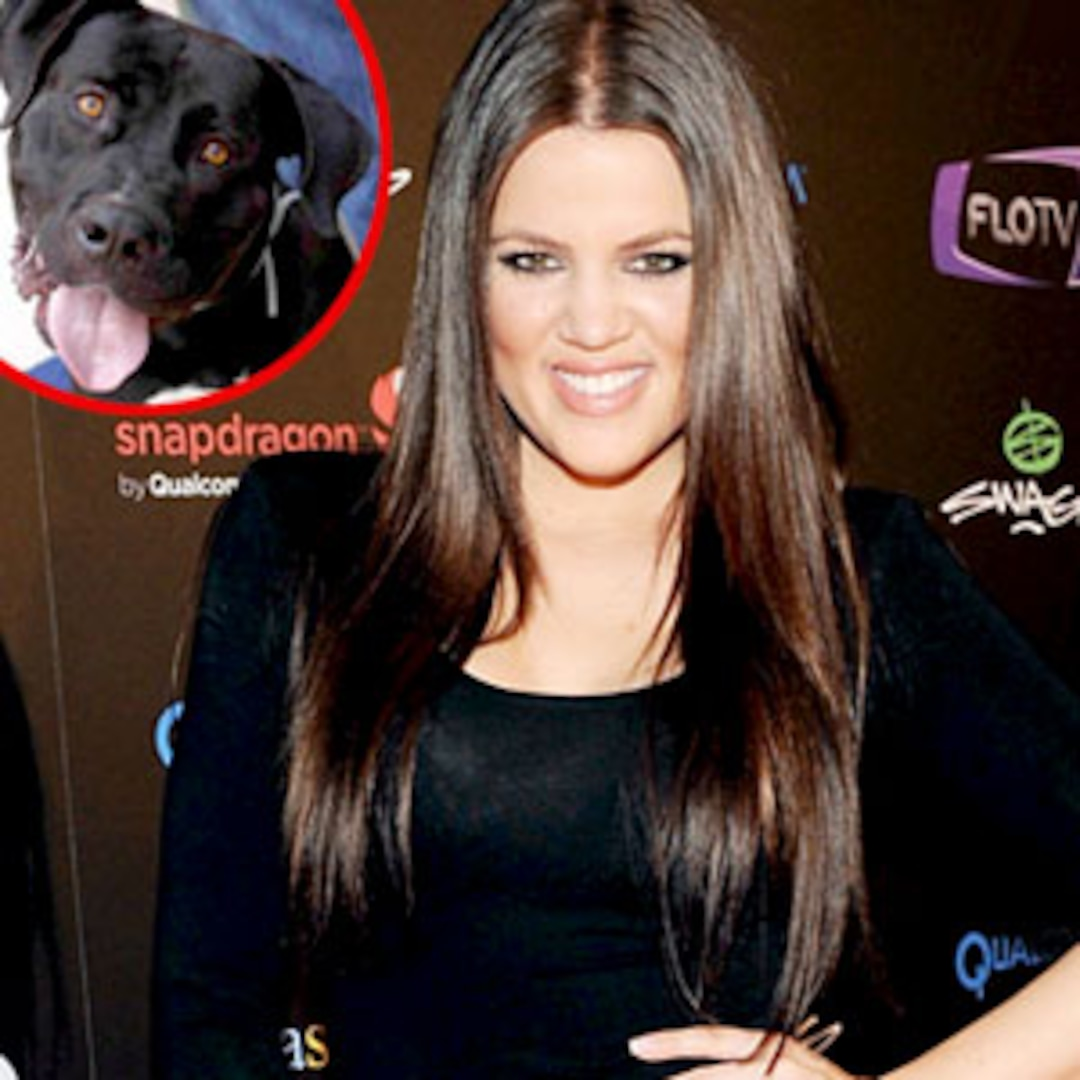 Khloé Kardashian Odom Is This Pup's Fairy Dogmother