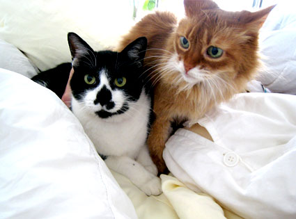 Butch and Cleo, The Cats