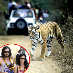 Russell Brand, Katie Perry, Tiger