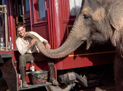 Water for Elephants, Robert Pattinson