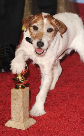 Uggie, Dog