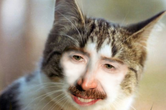 Nic Cage Cats Soup X4