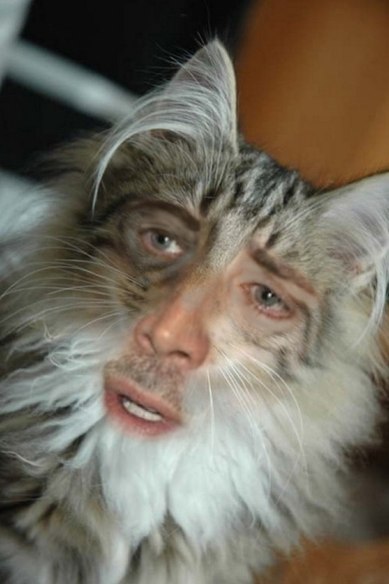 Nic Cage Cats again Soup