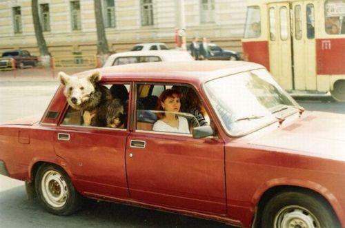 Bear Car Estonia Soup X2