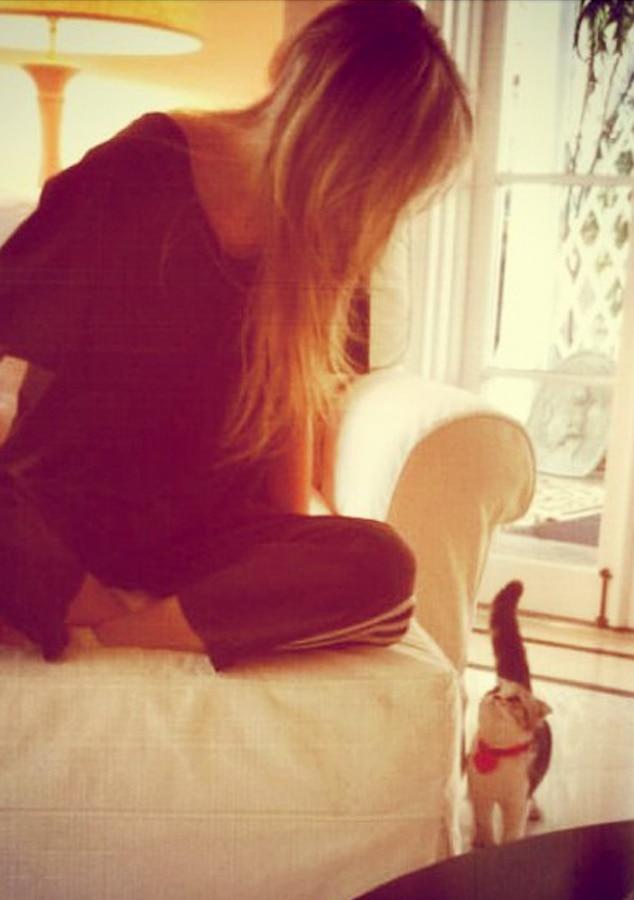Taylor Swift, Meredith Cat