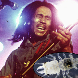 Bob Marley, Parasite