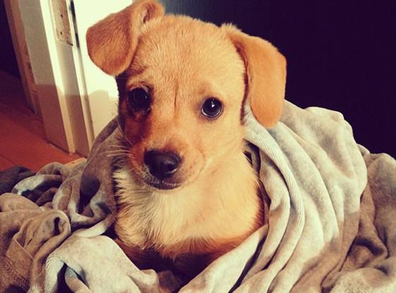 Lauren Conrad, Puppy, Twit Pic