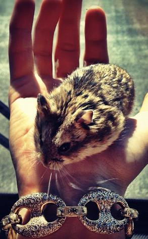 Justin Bieber, Hamster