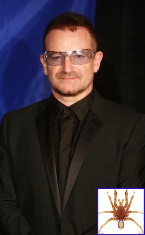 Bono, Spider