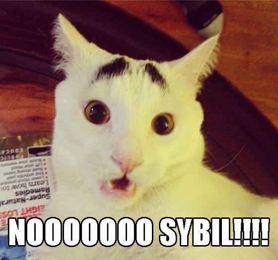 Eyebrow Cat Memes