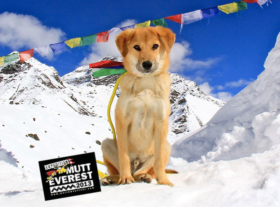 Rupee, Mutt Everest Expedition