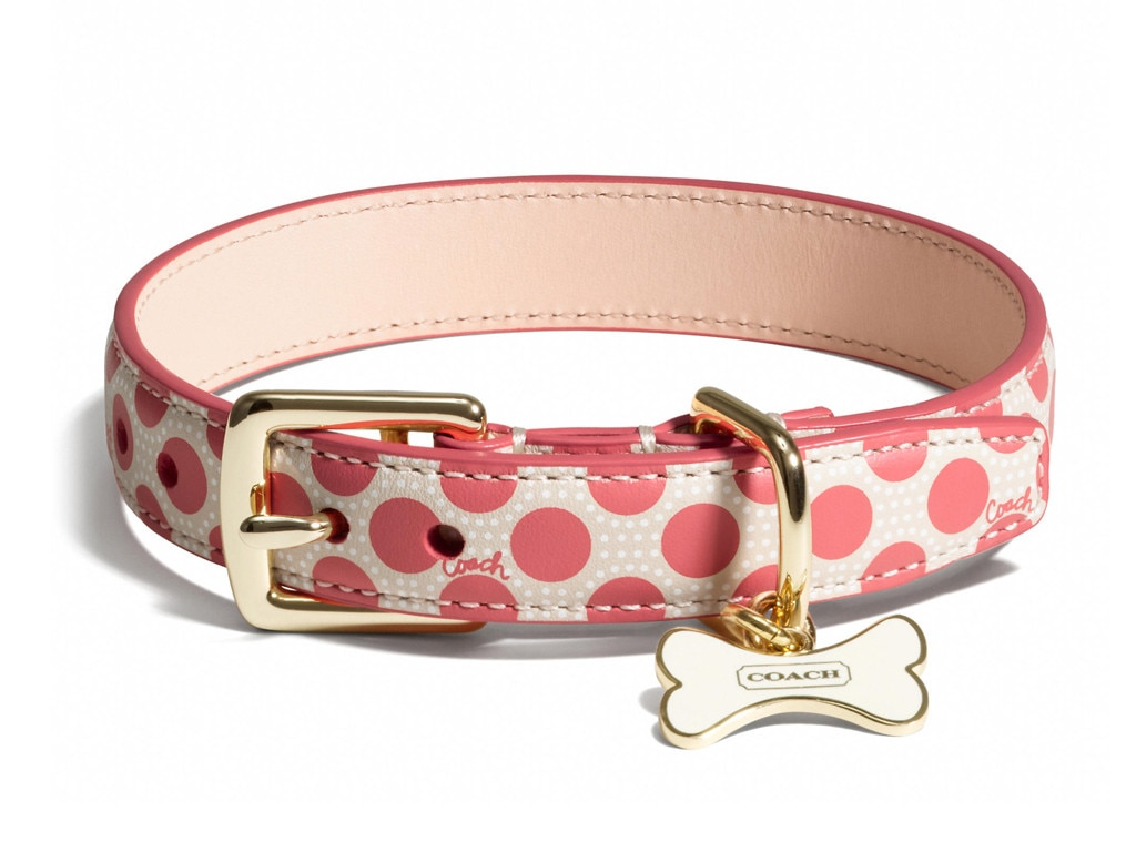 Coach Poppy Polka Dot Collar, Holiday Pet Gift Guide