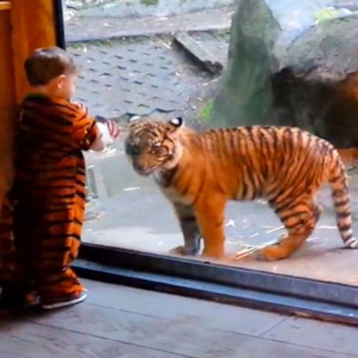 A Dose Of Cuteness This Kid In A Tiger Costume Playing With A Tiger