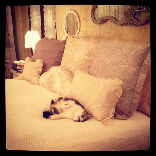 Taylor Swift, sleeping